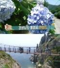 '2TV 생생정보' 통영시 연화도, 수국길 스쿠버다이빙-자연산 고등어 낚시