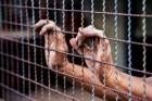②악명높은 교도소…1.5평에 두 명 수감, 식사는 빵·수프만