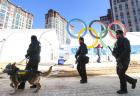 [리얼타임 평창]'노로바이러스' 극복, 안전 올림픽 책임지는 민간안전요원