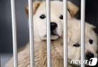 제주 유기동물보호센터 내 동물병원 개설