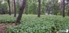 동부산림청, 국유림 임산물 소득 재배단지 시범조성
