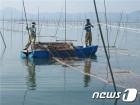 전남지역 김 생산액 사상 첫 4800억원 돌파