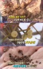 '리얼다큐 숨' 겨울철 최고 효능, 신비의 겨울약초 '송근봉-겨우살이-토사자'