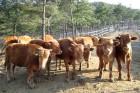 """""""가축 밀집 사육환경 개선…동물약품 적정량 사용해야"""""""