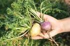 아열대·약용작물농가, 로열티 부담 새로 생길 수도…