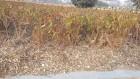 울산시, 버려지는 나무 녹지대 관리에 재활용