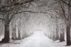 [오늘날씨] 늦은 오후 눈·밤부터 '한파'…미세먼지 일부 '나쁨'