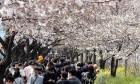 [내일 날씨] 포근한 봄 날씨...낮 최고 기온 11도