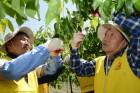 한전원자력연료, 자매마을 과수농가 일손돕기 나서