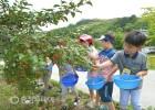 18일 충주 등대공원 일원 보리수길 열매따기 행사