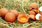 나주 달걀서 살충제 기준치 초과 검출…전량 회수