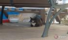 대청호, 고양이 유기장소로 전락