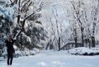 """""""4년 만의 폭설"""" 흰 눈으로 뒤덮인 일본 도쿄 상황 (사진 23장)"""