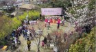 서귀포서 즐기는 봄꽃과 전통문화의 향연