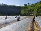 진안읍 강풍피해 농가 찾아 일손 도와