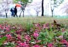 [오늘 날씨] 전국 봄비에 이른 더위 가셔…미세먼지 '양호' 수원 13∼19도 인천 13∼17도