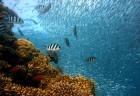 태즈메이니아에서 발견된 희귀 어류, '레드핸드피쉬'
