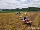의성군 안전과 직원, 마늘수확 영농지원