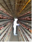 인천지역 생산된 계란 검사결과 적합 판정