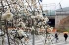 [3월 봄 축제] 의정부예술의전당 이성근 화백전…부천 한국만화박물관, 양평 고로쇠축제