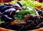 마운트 데저트 섬의 홍합 식용 금지…해양 플랑크톤의 신경독에 오염