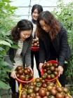 봄 여름 가을 겨울, 입맛 유혹 강진 10대 농식품