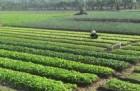 """캄보디아·베트남, 은퇴자들의 천국…""""생계비 최저"""""""