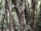 제주도의 숨은 여행명소 '환상숲 곶자왈공원' 겨울 2월에도 잎이 파릇! 인근에 바다전망 좋은 게스트하우스, 해물짬뽕맛집과 신창~차귀 해안도로 드라이브코스에 노을까지