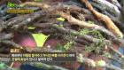 '2TV 생생정보' 석이버섯 특징과 효능은? '위장 안정'… 말굽버섯·골쇄보는?