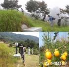 [포토뉴스]추석 일주일 앞두고 막바지 벌초 작업...'진드기·말벌' 주의령