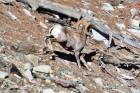 백두산 높이·왕복 13마일 코스, 다소 고단한 산행