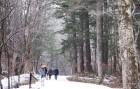 눈과 얼음…평창의 눈부신 잔치는 이미 시작됐다