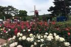 서울대공원 5만4075㎡에 수백만송이 장미꽃밭 펼쳐진다