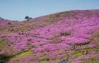 [봄 여행주간] 봄에 만나는 풍요로움 '황매산, 합천영상테마파크'