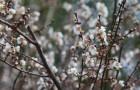 따뜻한 봄 제주에서 미리 만나자!… 제주에서 열리는 '봄 축제'는?