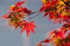 11월 17일은 을사늑약으로 일본에 외교권 빼앗긴 '순국선열의 날'...'시일야방성대곡' 써지고, 의병 일어남