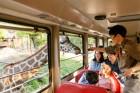 """""""온 가족이 즐기는 동물 체험!"""" 에버랜드, 여름방학 '동물 탐험 프로그램' 오픈"""
