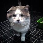 골목대장 고양이 바니의 미소 찾기