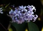 [내일 날씨] 전국 흐리다 '촉촉한 봄비'…이른 더위 한풀 꺾일 전망