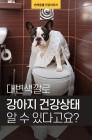 [카드 뉴스] 대변색깔로 강아지 건강상태 알 수 있다고요?