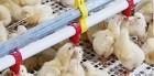 육계산업 숨통 조이는 '이동제한'