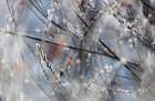 오늘 날씨, 전국 흐리고 눈 비소식, 평창 대설 예비특보