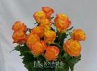 성년의 날, '국산 장미'로 축하 마음 담자...색 선명하고 수명 길어