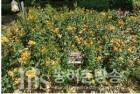 농진청, 올림픽공원 장미축제서 '국산 장미 정원' 선보여