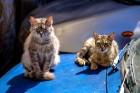 길고양이 모닝노크 로드킬...동물 관련 사고 대처법 3